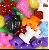 The Beadery 1153SV Pet Parade Beads #1153